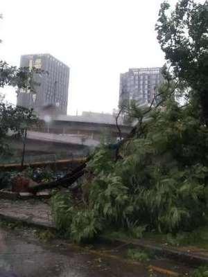 台风来袭大树被连根拔起