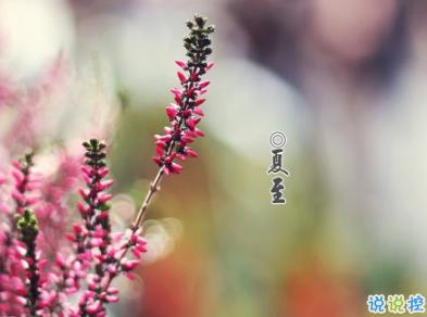 2019夏至早安心语说说大全夏至快乐祝福语说说发布时间:20