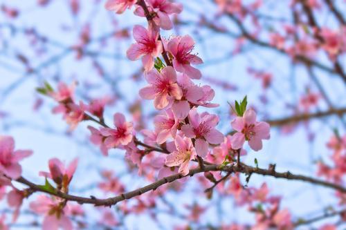 迎接春天到来的句子推荐